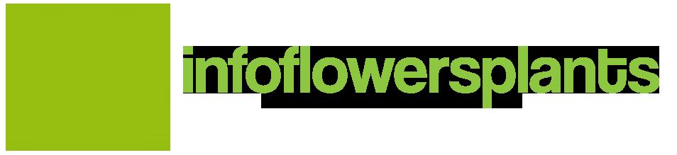 InfoFlowersPlants | Search Engine